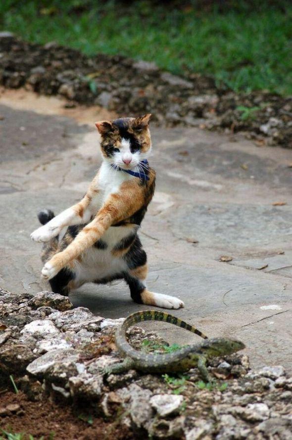 Crouching Tiger, Hidden Kitty.